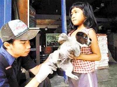 爱旅行网提示最近预计前往巴厘岛的游客注意饮食安全,远离猫,狗等小